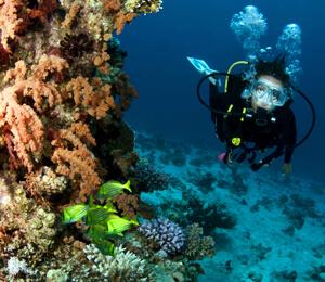 Cabo Scuba Dive