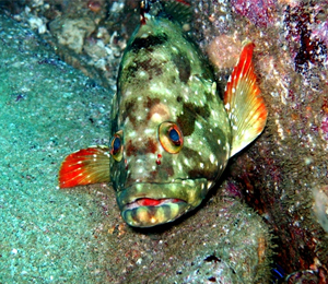 Cabo San Lucas Marine Preserve